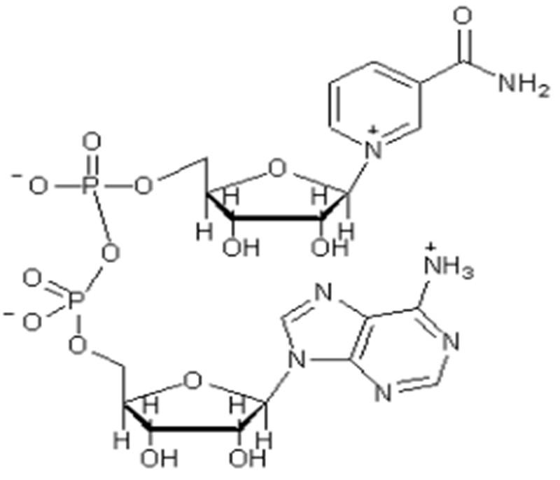 β-nicotinamide adenine dinucleotide phosphoric acid(NADP)CAS :53-59-8